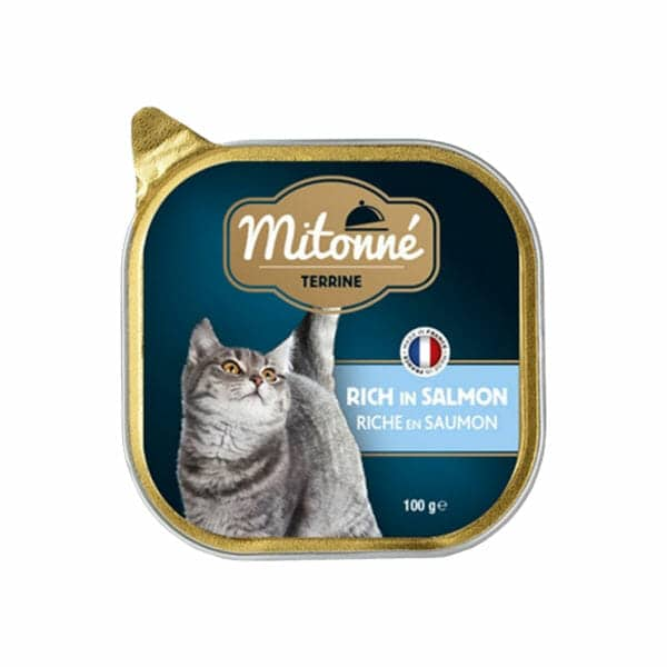 خوراک کاسه ای گربه میتونه با طعم ماهی سالمون