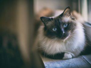 مقایسه و انتخاب گربه مناسب