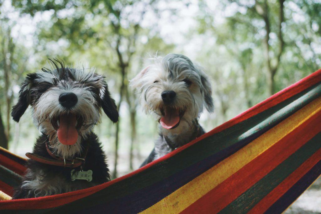 بهترین نژاد های سگ
