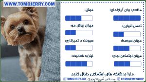 معرفی نژاد های سگ محبوب