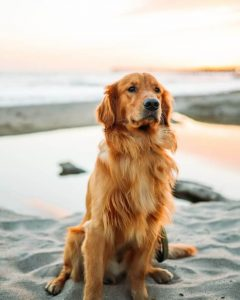 نژاد های سگ مناسب آپارتمان