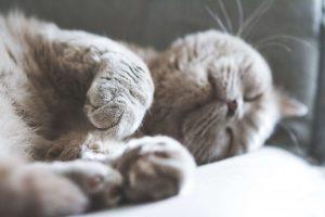گرفتن ناخن گربه
