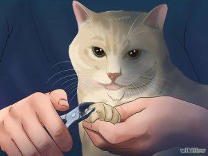 بریدن ناخن گربه