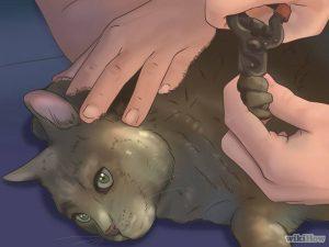 گرفتن ناخن گربه به روش آسان