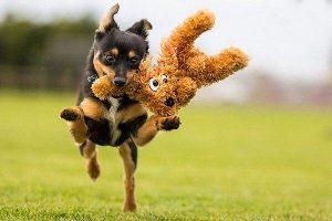 وسایل ضروری برای سگ