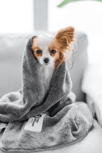 لوازم مورد نیاز سگ خانگی