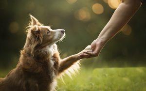 فرمان دست بده به سگ