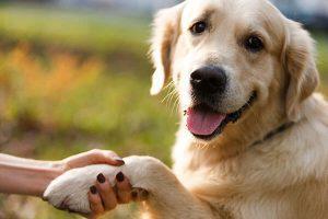 دست دادن سگ