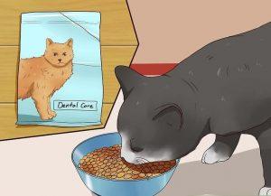 مسواک زدن گربه