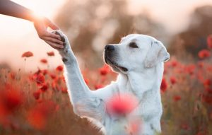 دست دادن به سگ