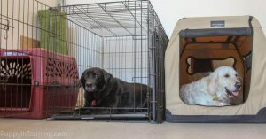 باکس و قفس سگ