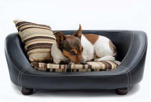 تخت خواب سگ