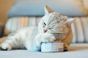 کنسرو و پوچ گربه