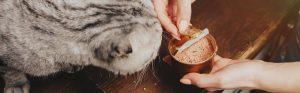 غذای کنسروی گربه