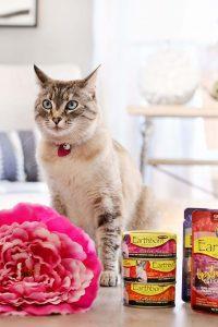 غذای مرطوب گربه