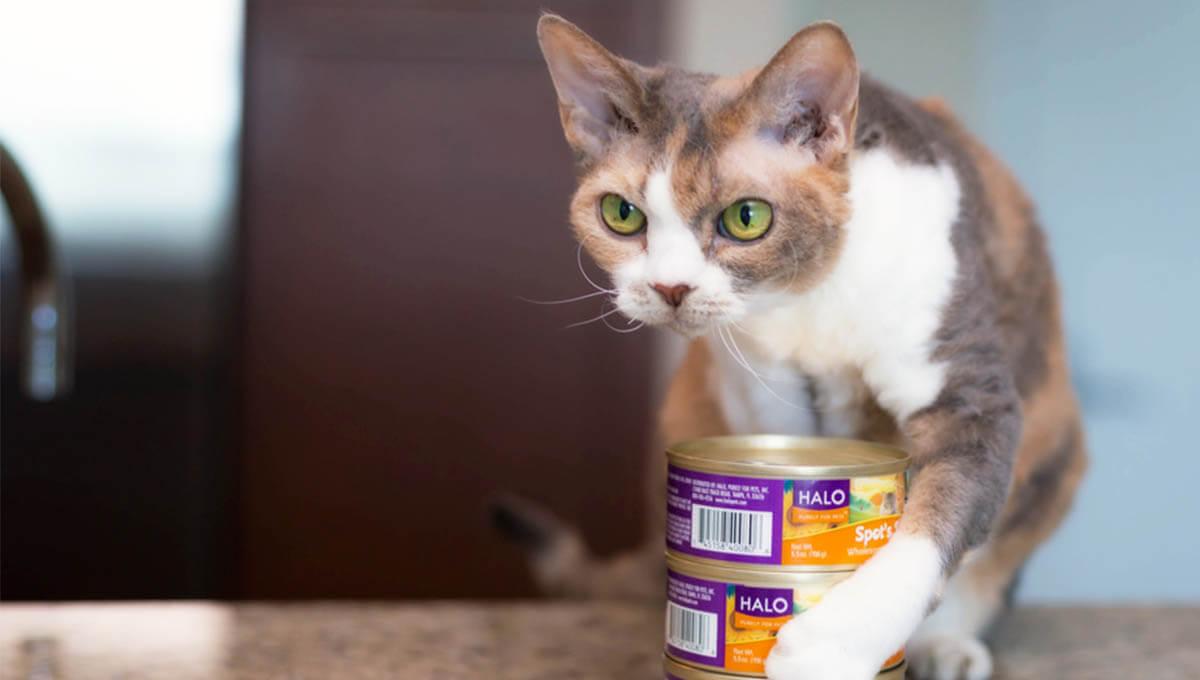 راهنمای خرید غذای کنسروی گربه