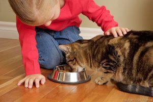 غذای کنسرو برای گربه